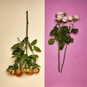 Flores a domicilio Ñuñoa